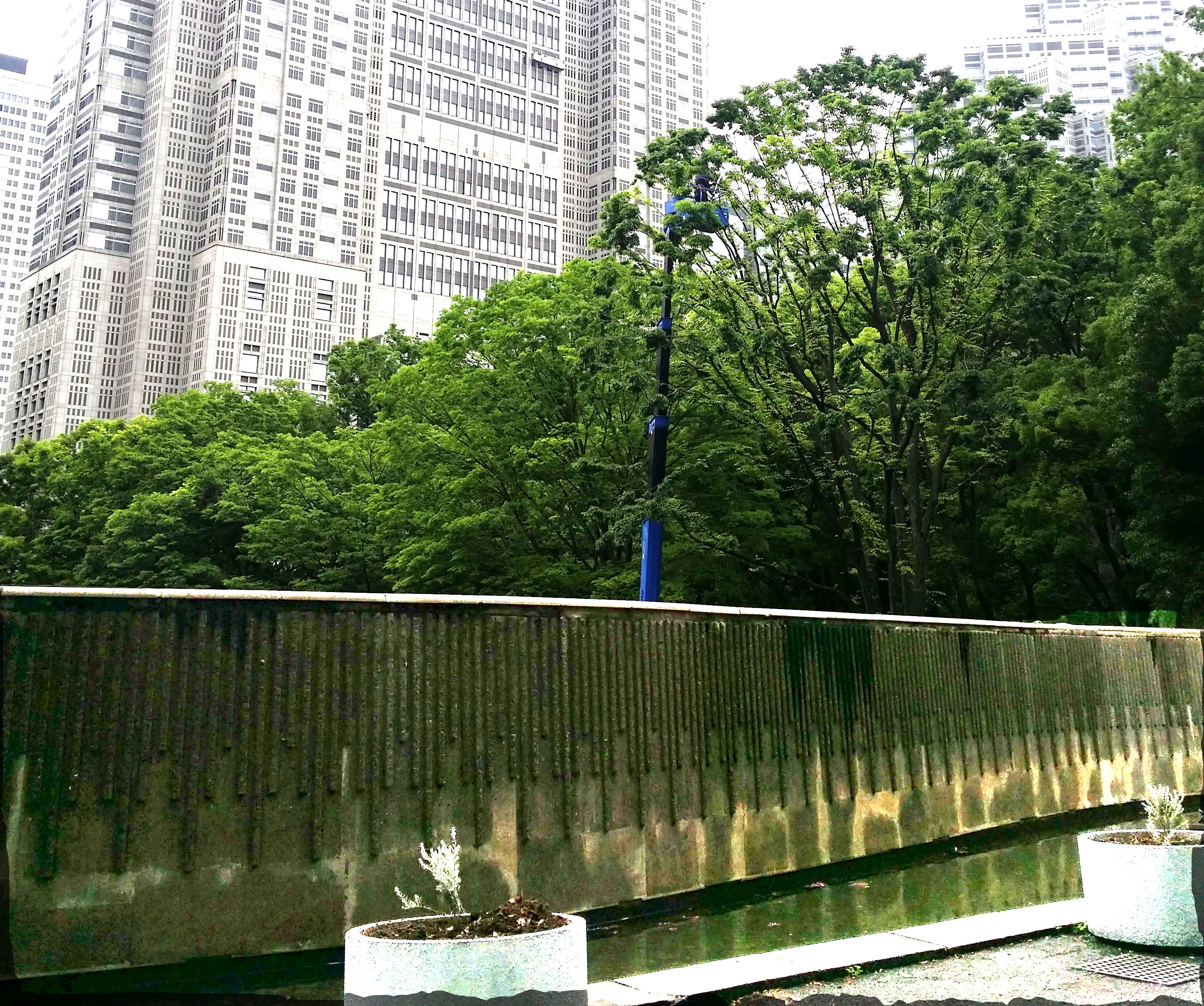 2020年5月22日 新宿中央公園